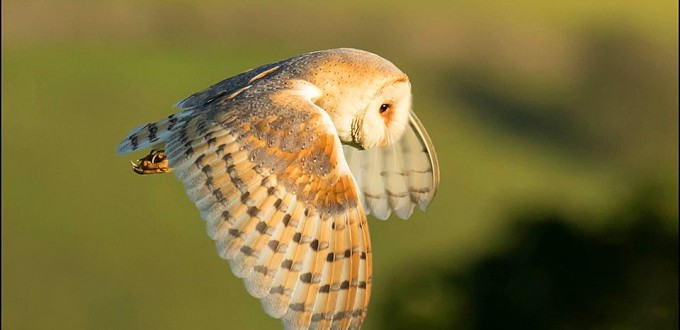 Dave Hughes