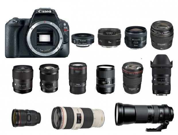 Best Lenses for Canon EOS Rebel SL2 | Camera Times